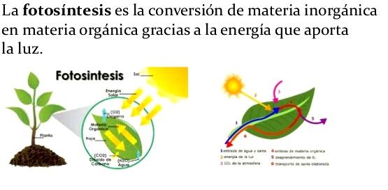 ¿Qué es la fotosíntesis?