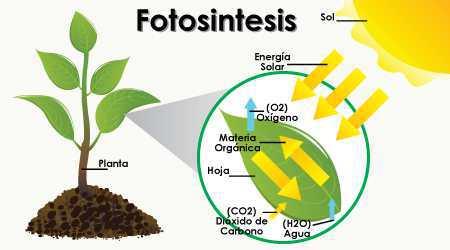 Funcion del dixido de carbono en la fotosintesis 41