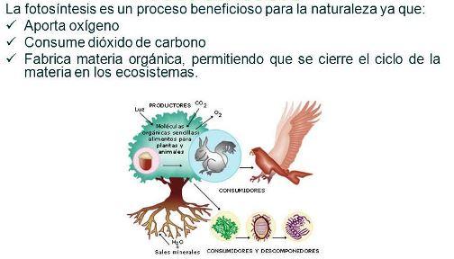 ¿Cuál es el objetivo principal de la fotosíntesis?
