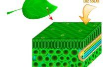 Características de la fotosíntesis