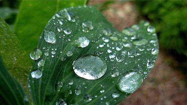 conoce las características de la fase luminosa y oscura de la fotosíntesis