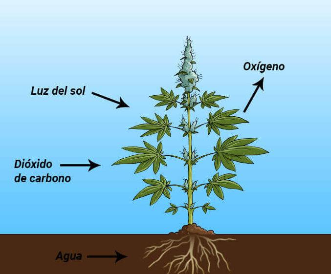 descubre la conclusión de la fotosíntesis