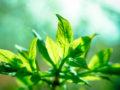 conoce cuándo ocurre la fotosíntesis en las plantas