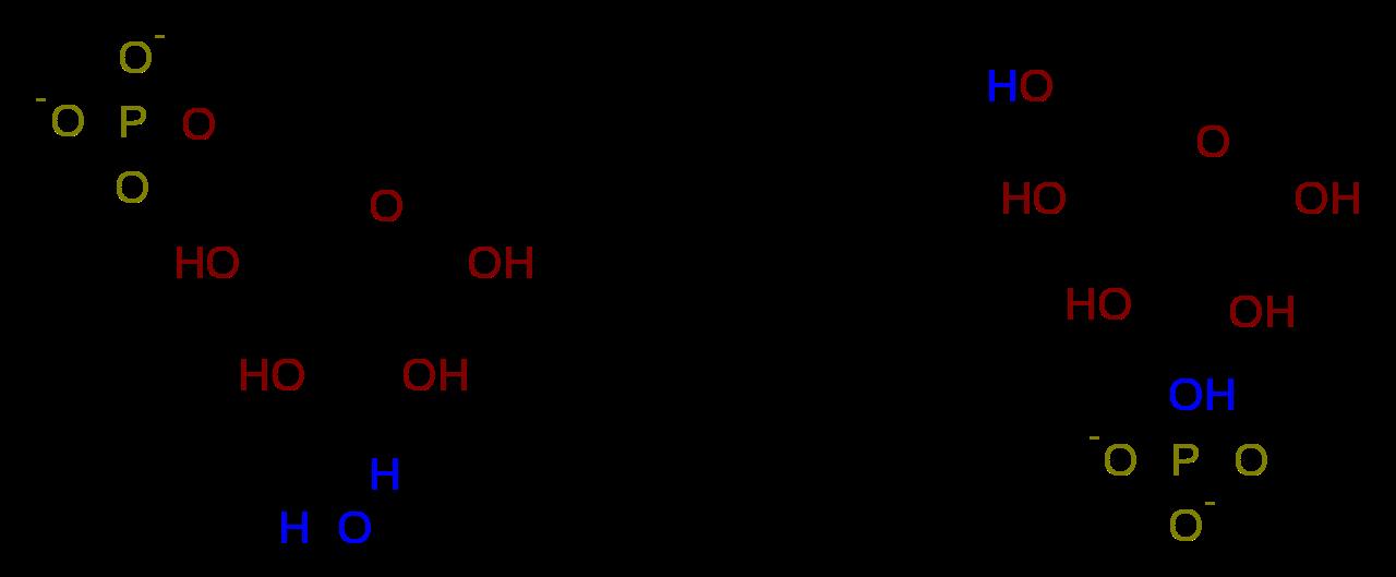 aprende la ecuación química de la fotosíntesis