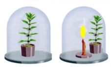 Experimentos de la fotosíntesis en las plantas