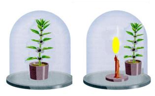 descubre los experimentos de la fotosíntesis en las plantas
