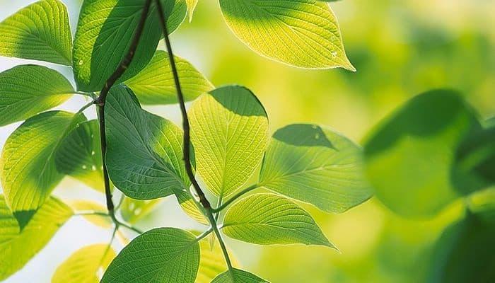 conoce la importancia biológica de la fotosíntesis