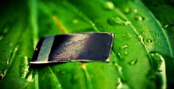 conoce cuál es la importancia económica de la fotosíntesis