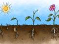 conoce la importancia de la energía solar en la fotosíntesis