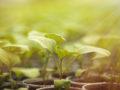 conoce qué produce la fotosíntesis