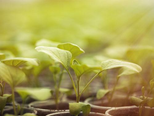 Qué produce la fotosíntesis - La fotosíntesis