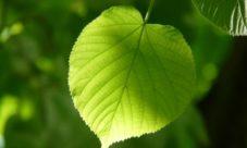 Quiénes pueden realizar la fotosíntesis