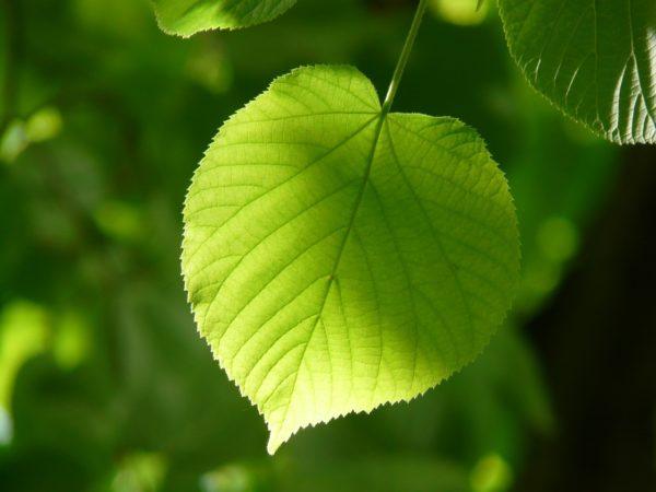 aprende quiénes pueden realizar la fotosíntesis